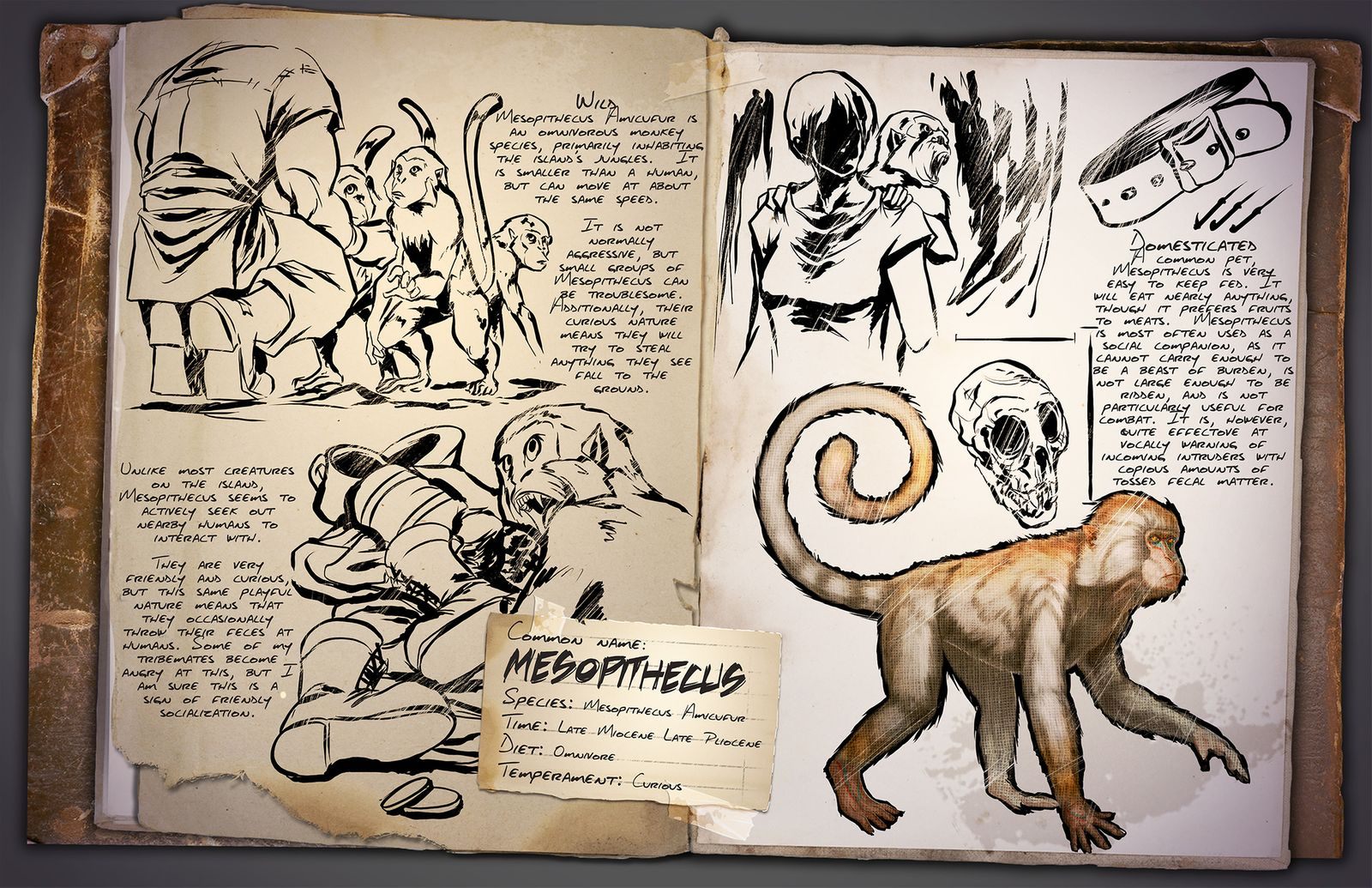 Dino Informe Mono – Mesopithecus